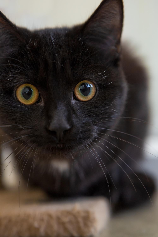 KW_Cats1_056.jpg