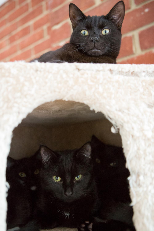 KW_Cats1_061.jpg