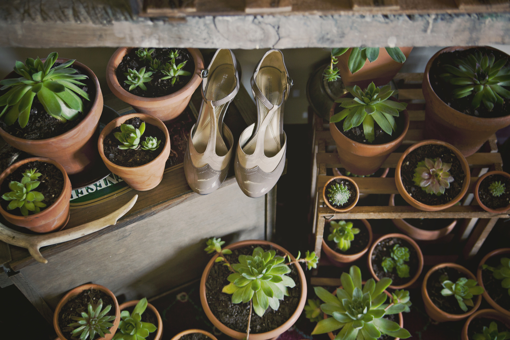 Succulents (and oh look some cute shoes!)