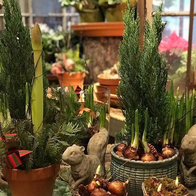 Last minute gift ideas @harvesthomewayzata Holiday Hours 12/22 9-4, 12/23 10-2, 12/24 9-4  Happy Holidays from all of us at Harvest Home!!! 🎄🎄🎄