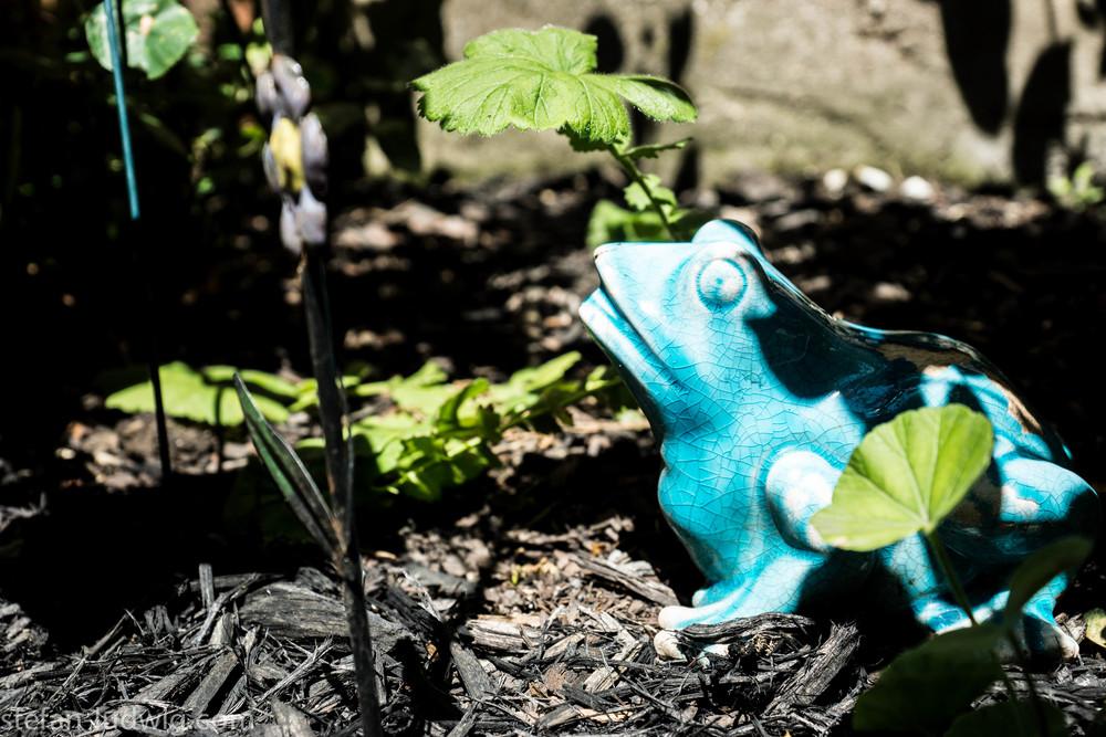 GardenWalk2013-04854.jpg