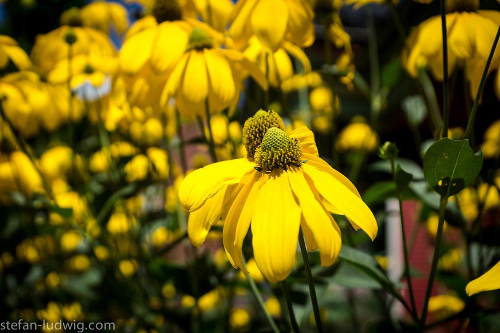 GardenWalk2013-04991.jpg