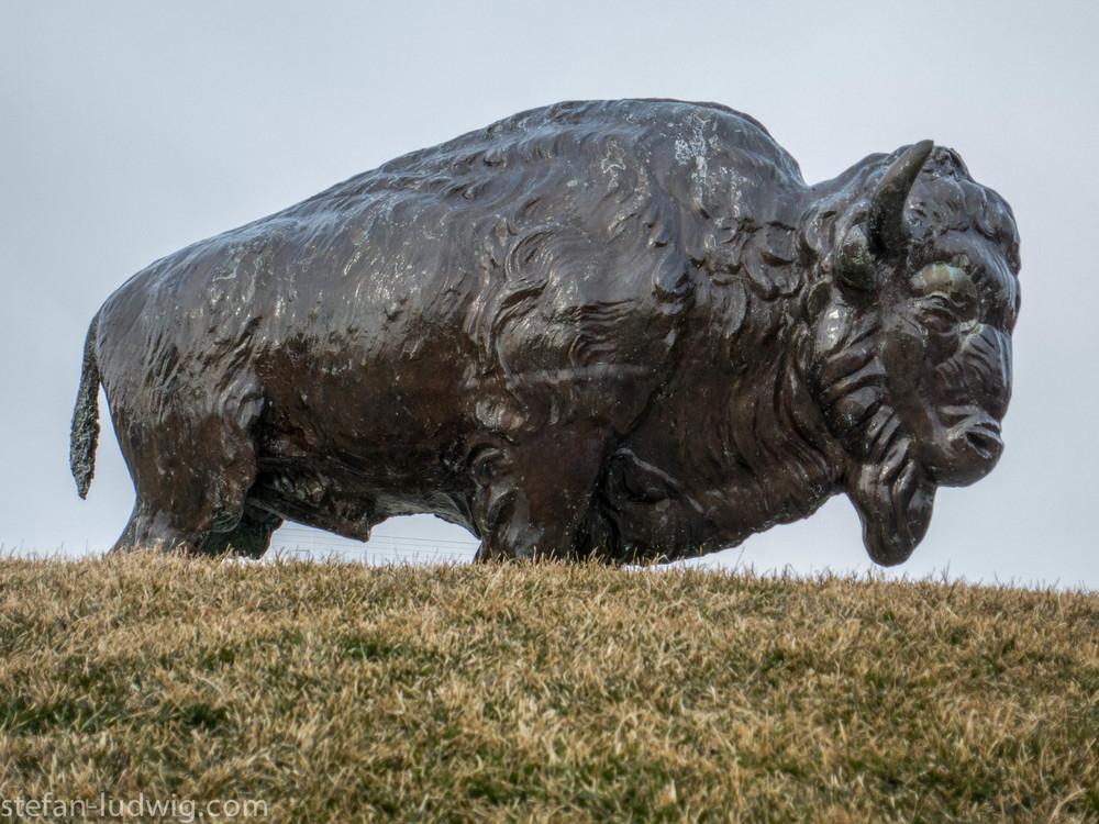 Buffalo-2563.jpg