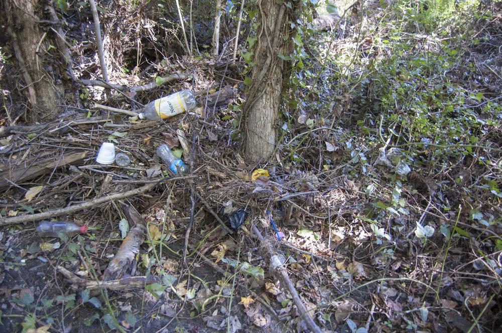 trash-2.jpg