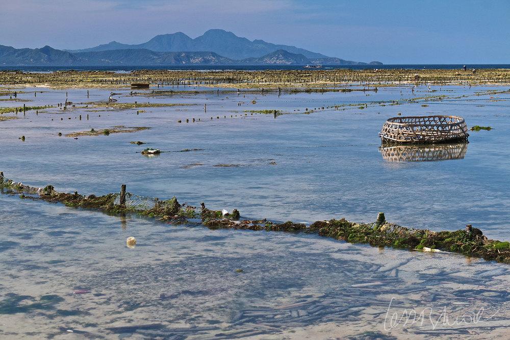 Espectacular panorámica de una granja de cultivo de algas haciéndose visible al bajar la marea con vistas al imponente Gunung Agung en Bali. Fotografía hecha en Nusa Lembongan, Indonesia. Click + info >