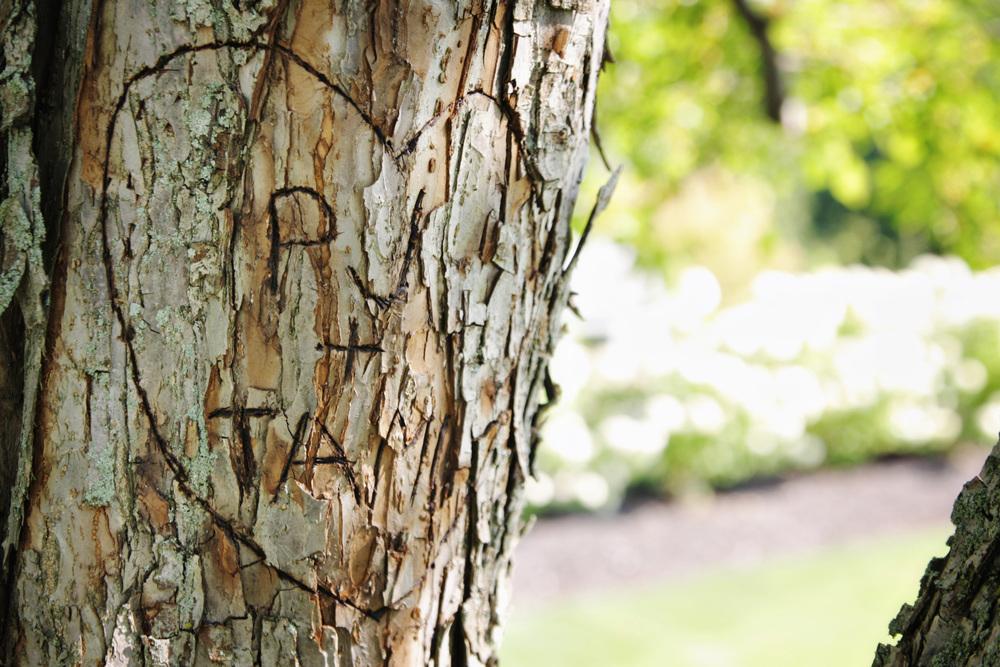 T+PJ 6 tree.jpg