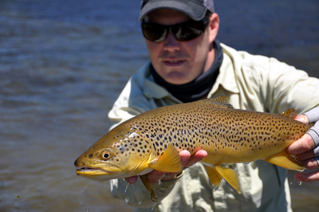 brown trout from reed lake.jpg
