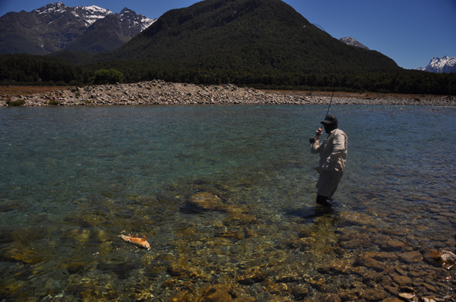 surprise ranbow trout - routeburn river.jpg