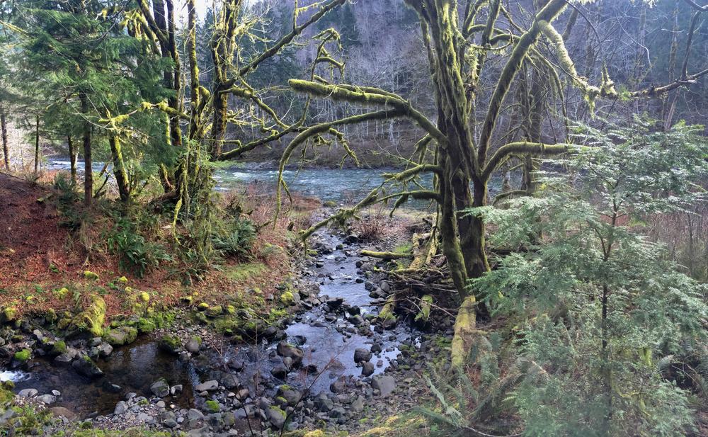 A pristine tributary.jpg
