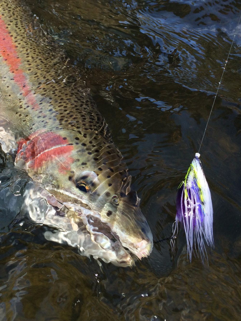 Colorful buck that took down this cool fly tied by Jason Hartwick.