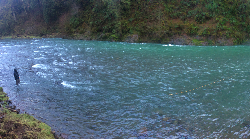 We spent a lot of time on smaller sized rivers this winter, which maintained a beautiful steelhead green color in between storms.