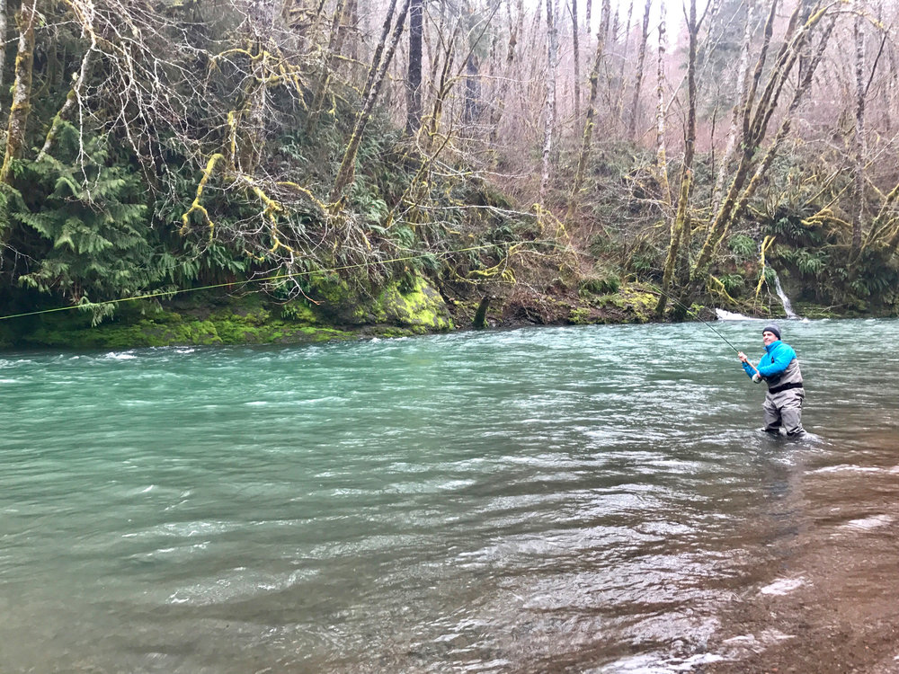 Jon Angelica hanging palming a hot steelhead in a gorgeous rainforest setting