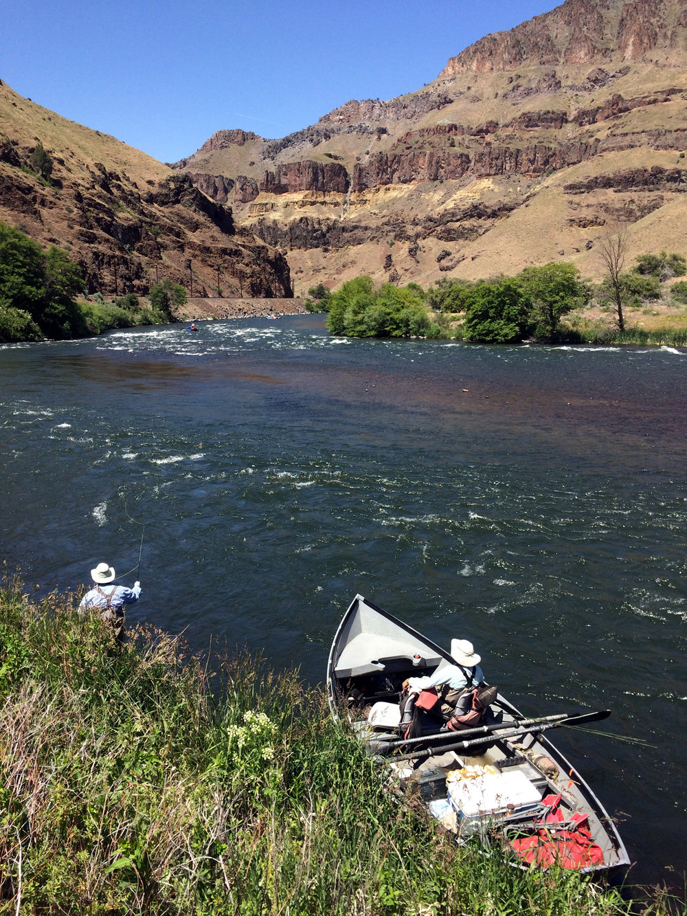 Dry fly fishing on foot in a fertile Deschutes backeddie.jpg