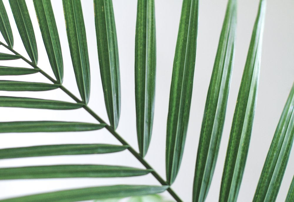 Palm-eads-569099-unsplash.jpg