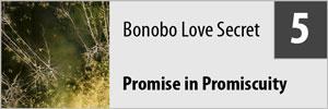 BonoboPromo05.jpg