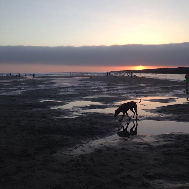 #dogbeach #snapshotsd @timmantoani