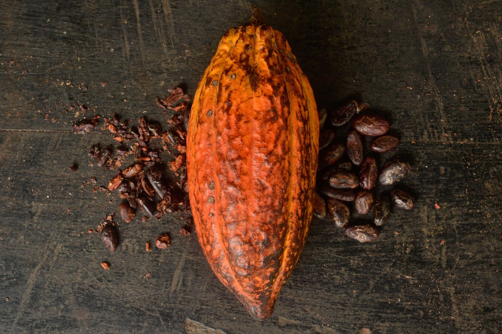 Cacao pod and cacao beans