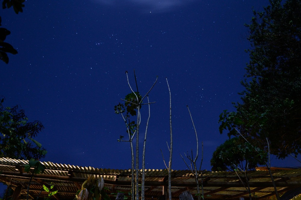 The roof of the plant nursery with a backdrop of stars