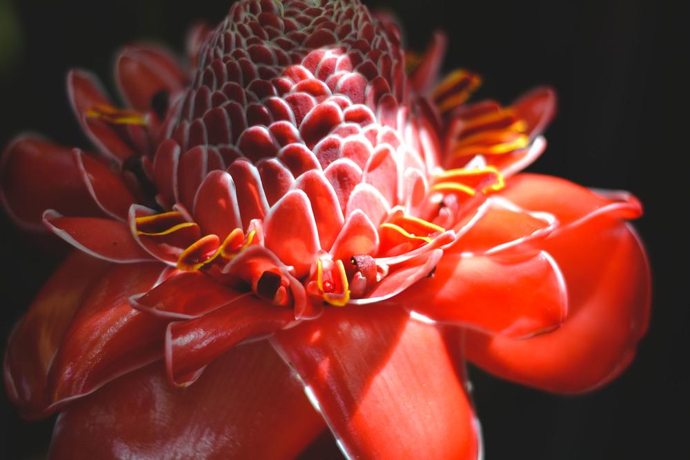 one of many beautiful flowers around La Iguana