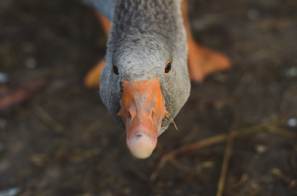 This fellow was particularly dubious about my camera