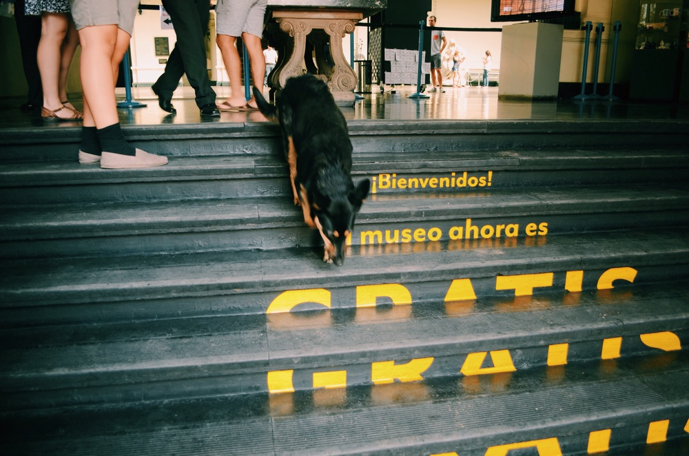 """Bienvenidos!  El museo ahora es gratis"" (Welcome! The museum is now free) did not apply to the dog who followed us in. He was not welcomed by the museum staff :("