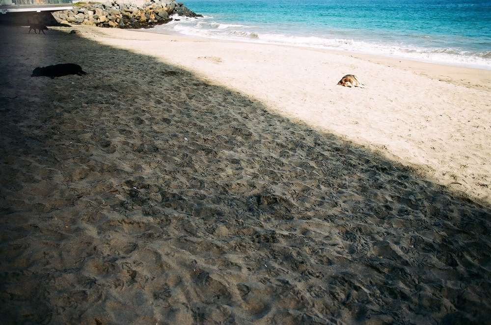 Viña // the town's dogs loved sleeping on the beach