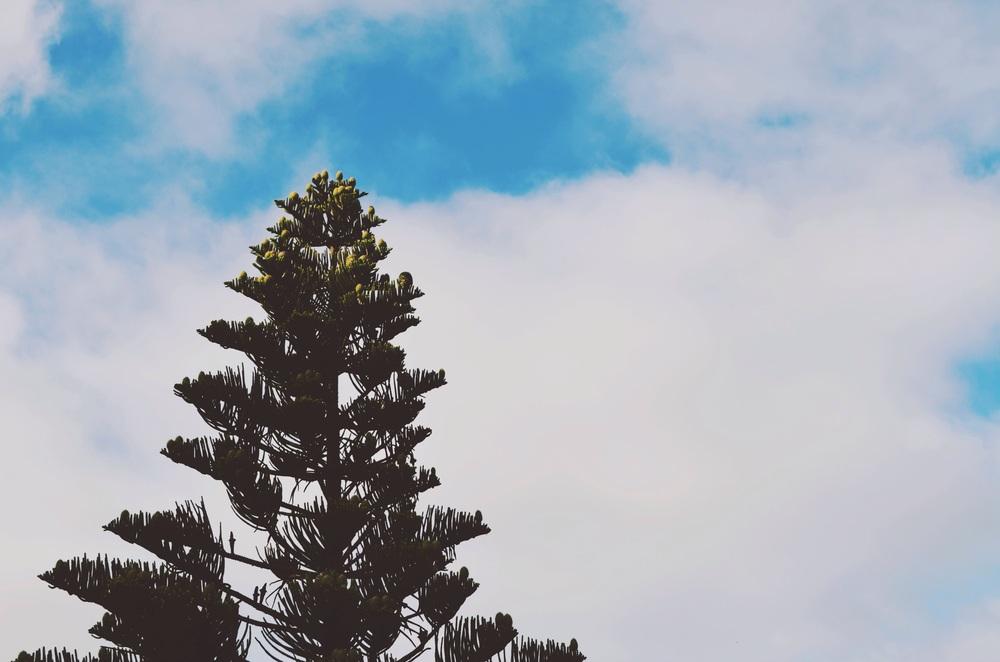 tree overlooking the ocean