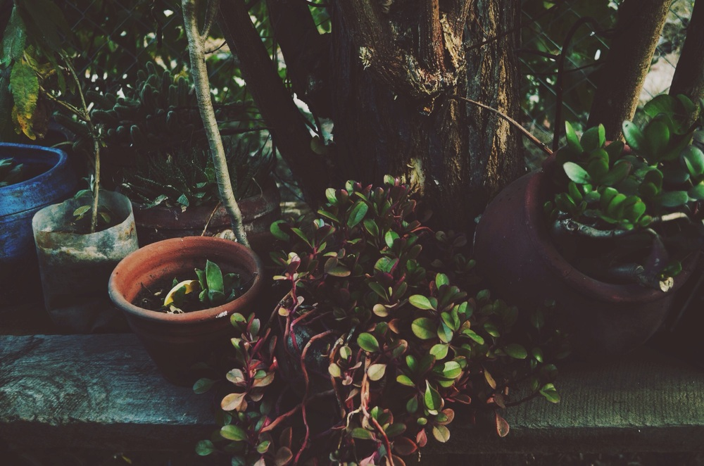 potted plants near the potter's wheel