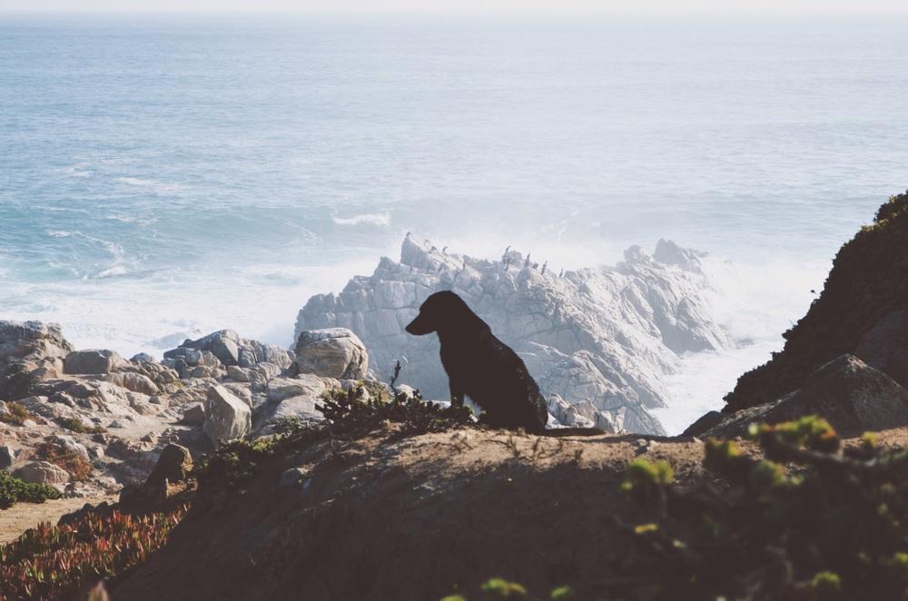 pensieve street dog surveying the ocean