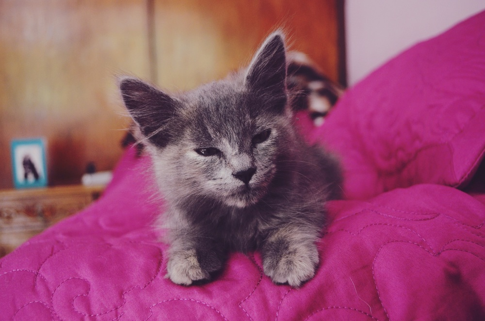 throwback photo.  such sass...at only a few weeks old, too