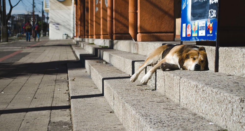landed in Chillán, a street dog strategically napping in the sun // 22nd july