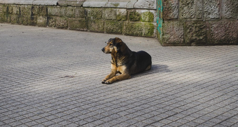 smart street dog. she eyeballed us for our lunch and then resigned herself laying down // 22 july