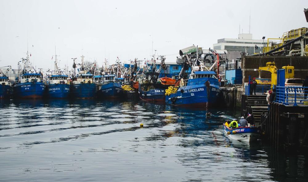 fisherman unloading their haul // 23rd july
