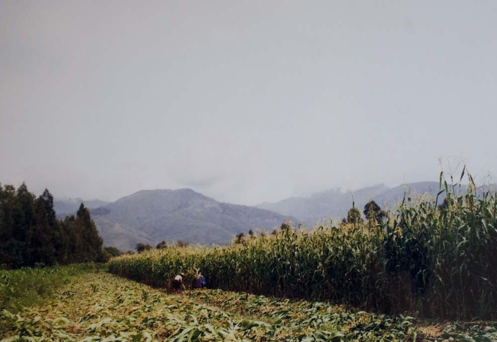 field work in vinto. these women cut down corn stalks like machines. the three of them were faster than four volunteers // february