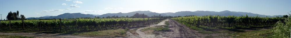 Vineyards in Santa Cruz // 27 november
