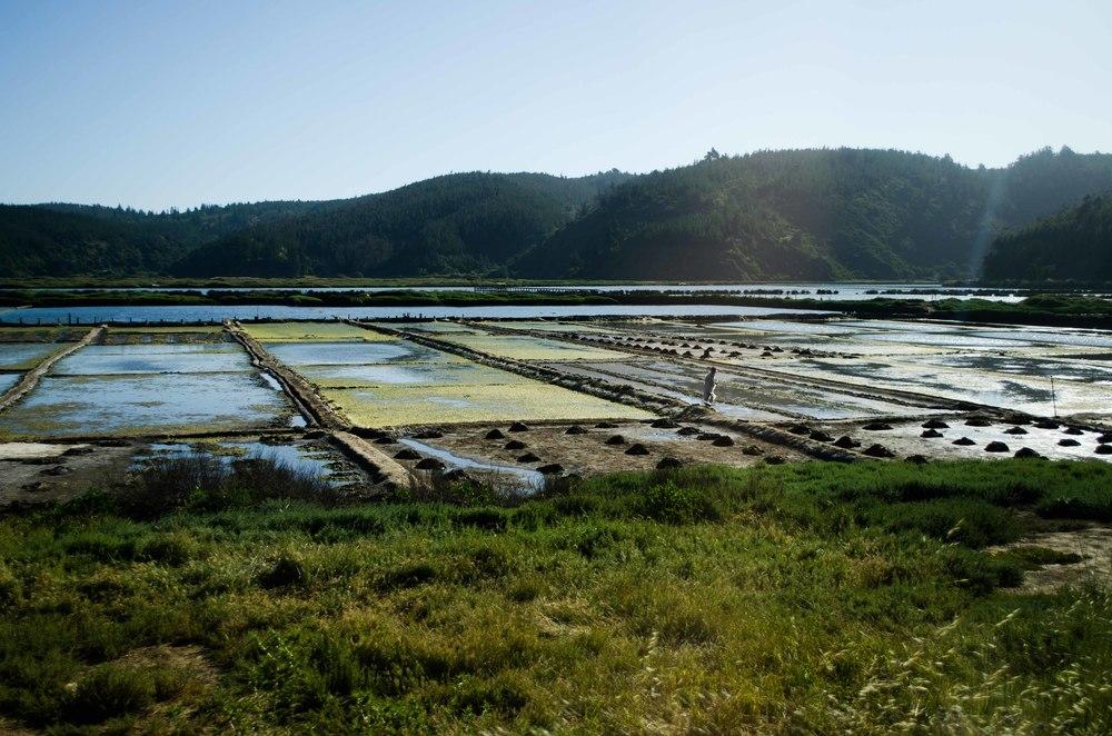 Salt harvesting // 28 november