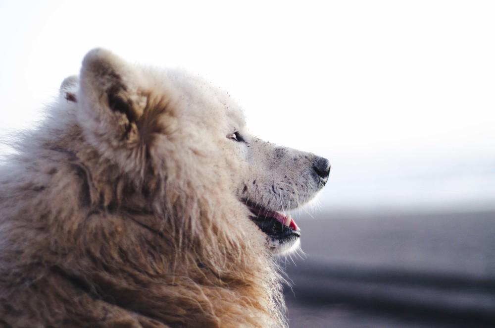 Pensive dog // 28 november