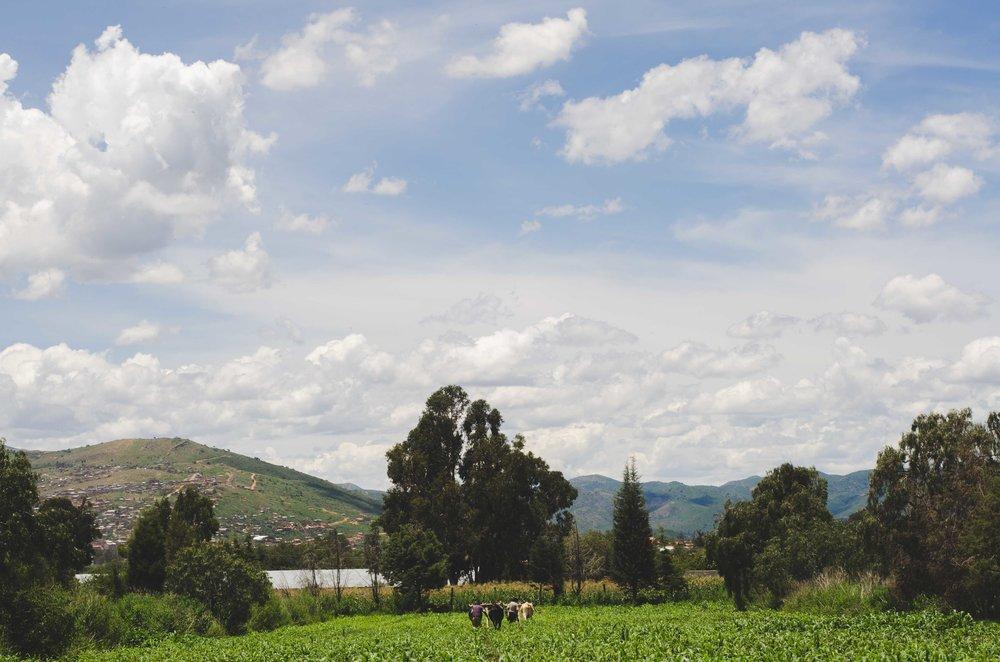Farm in Vinto