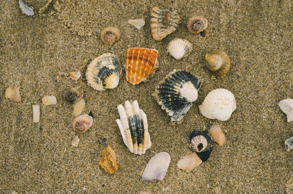 march 5 // a collection on the beach