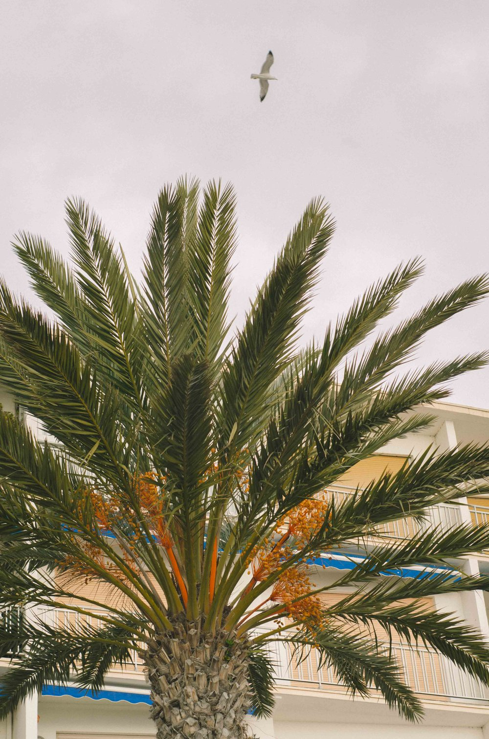 march 5 // seagull and palm tree