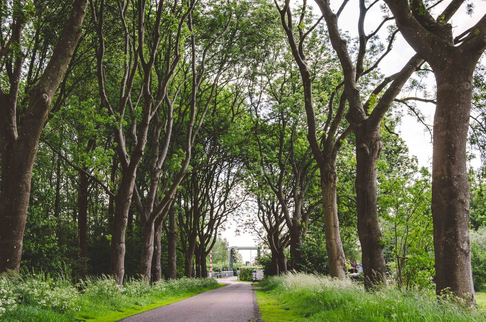 Tree-lined path back towards the town center
