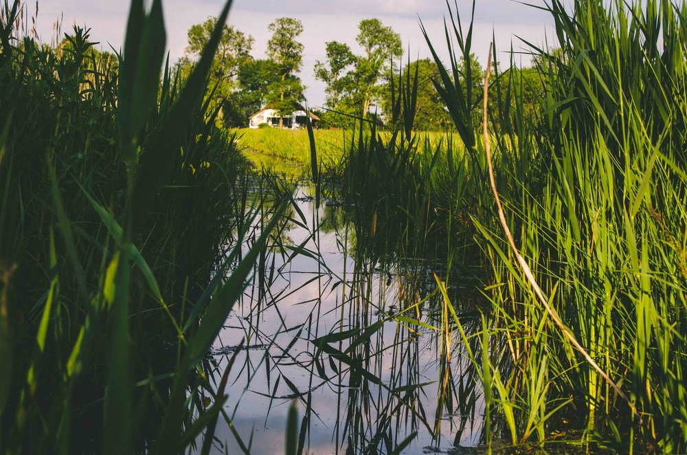 Swampy marsh