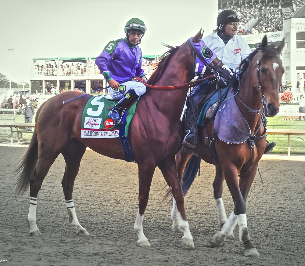 California Chrome, seen here at the Kentucky Derby (left), just won the Preakness.  Will he take the Belmont to become the first Triple Crown winner since Affirmed?