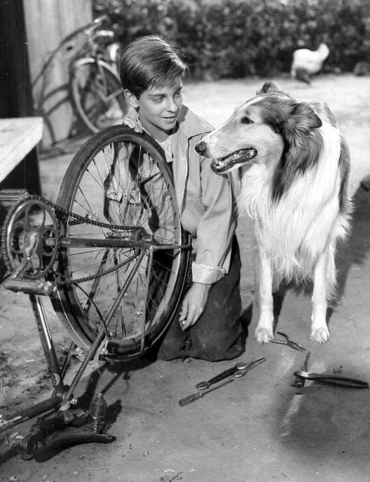 "Tommy Rettig starred with Lassie Jr. – son of Pal, who played Lassie in the 1943 film ""Lassie Come Home"" – in the first three seasons of the TV series ""Lassie."""