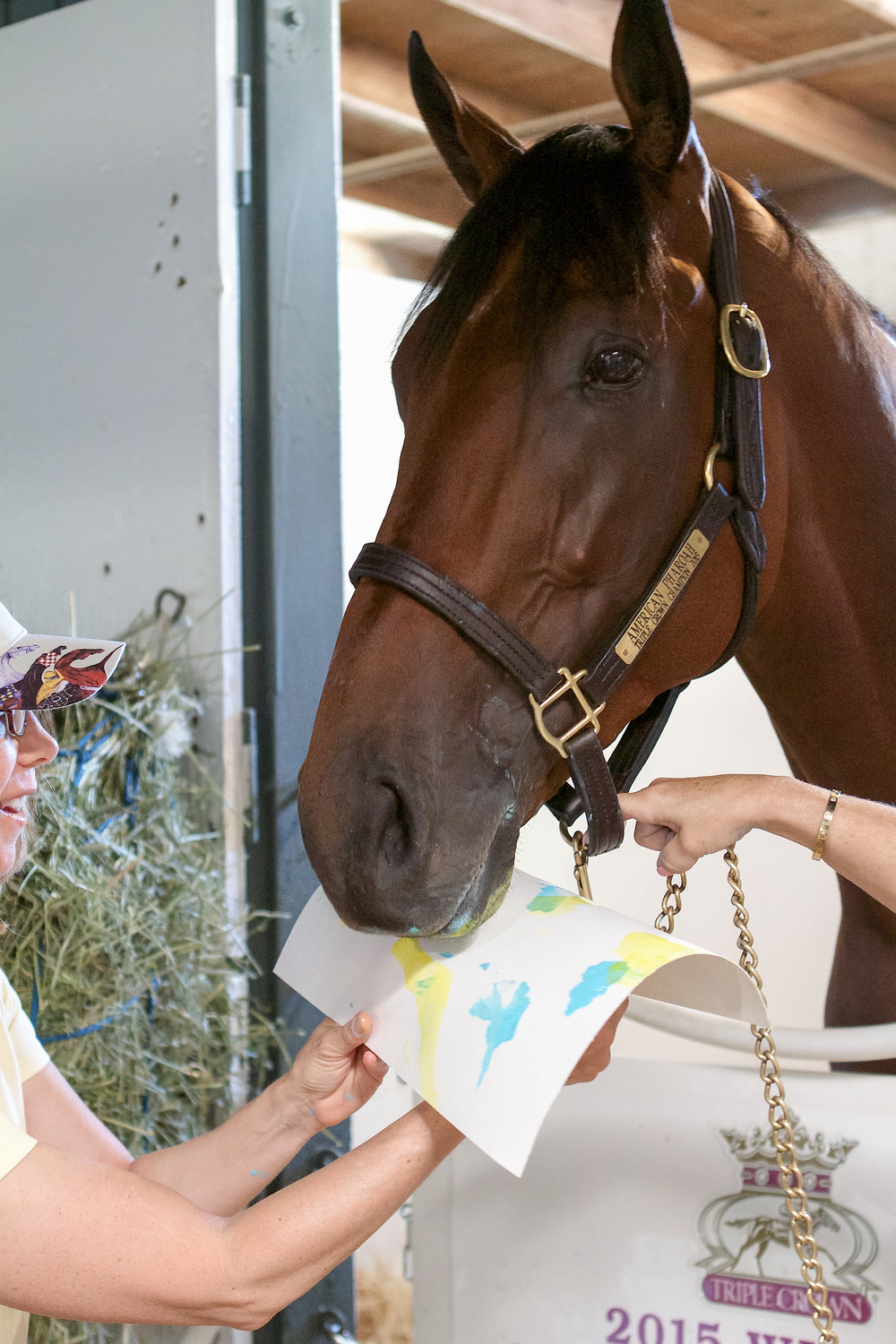 American Pharoah doing his artistic thing. Photographs by Ally Irons Morris. Courtesy ReRun Thoroughbred Adoption and After the Finish Line.