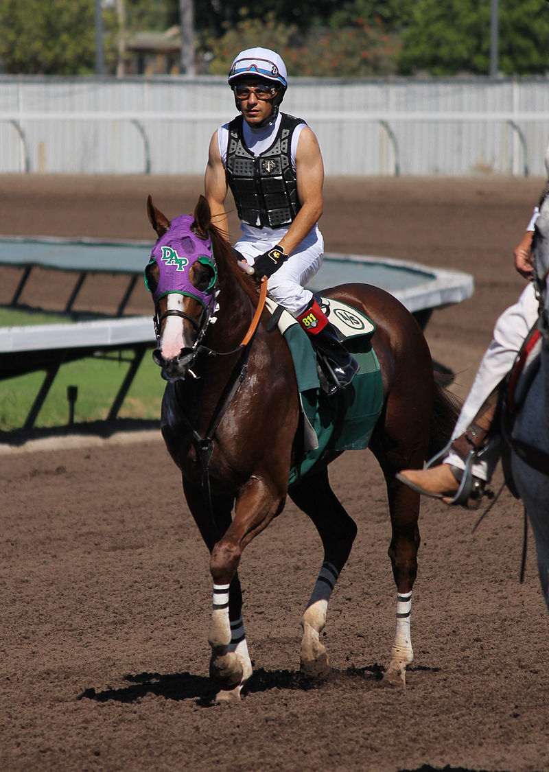 California Chrome with Victor Espinoza aboard at a public workout at Los Alamitos in September 2014.