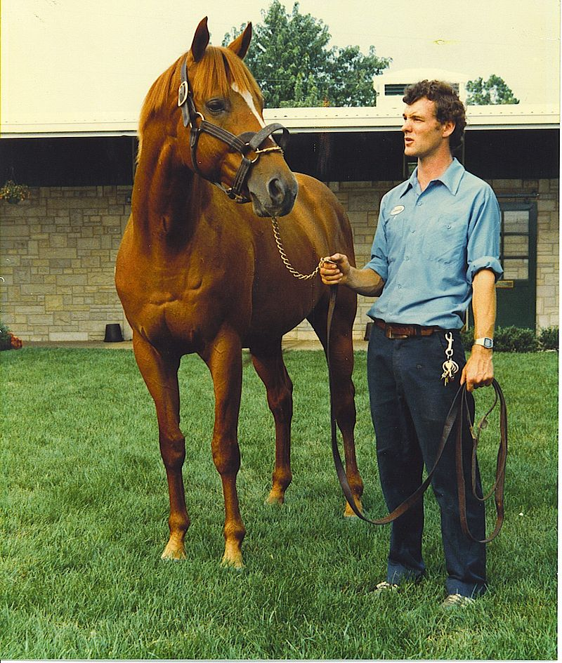 Affirmed, my favorite, at Spendthrift Farm in 1981.