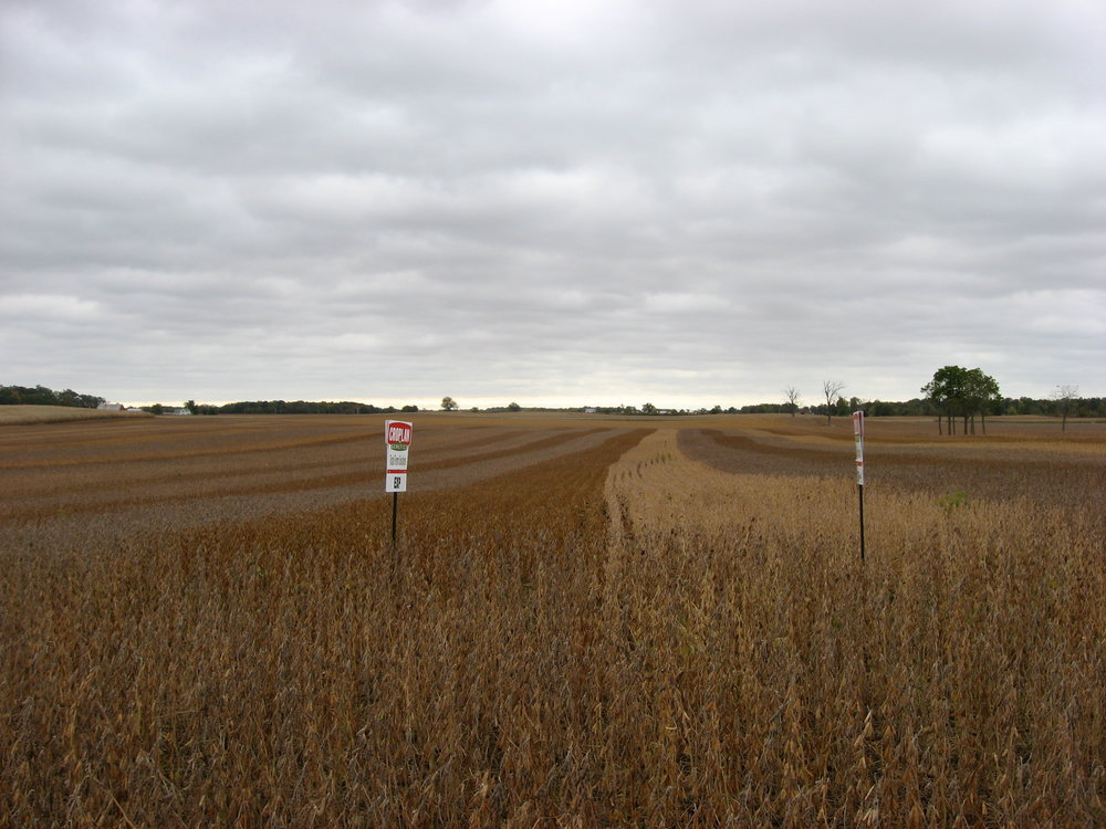 Multicolor_soybeans_in_Hale_Township.jpg