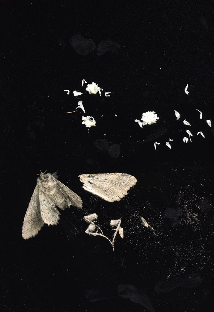 2012_scanographymoth004edit.jpg