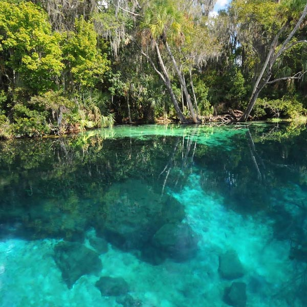 BEST SPRINGS IN FLORIDA  💦  We brought you the top 5 Springs in South Florida   Read More